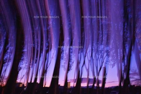 ブルーの光と街路樹の素材 [FYI00069217]