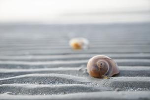 波紋と貝殻と海の記憶の写真素材 [FYI00069273]