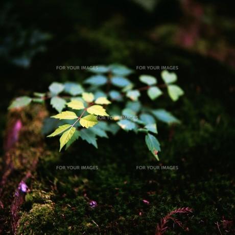 緑の素材 [FYI00069313]