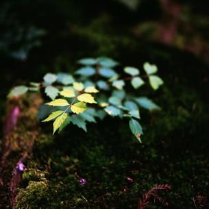 緑の写真素材 [FYI00069313]