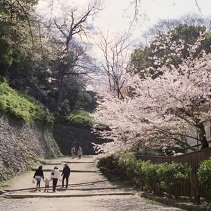 春の日の写真素材 [FYI00069316]