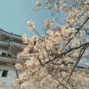 城と桜の写真素材 [FYI00069319]