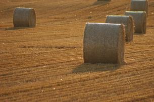 牧草ロールの写真素材 [FYI00069382]