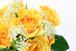 黄色い薔薇の写真素材 [FYI00069678]