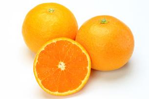 清見オレンジの写真素材 [FYI00069680]