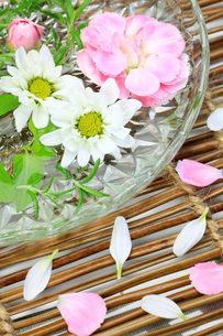 カーネーションと菊の写真素材 [FYI00070152]