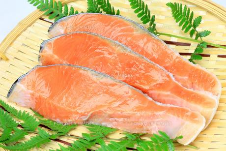 鮭の写真素材 [FYI00070258]