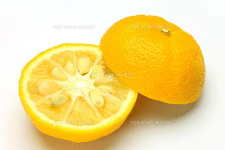 柚子の写真素材 [FYI00070688]