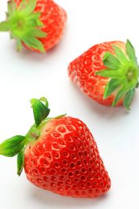 イチゴの写真素材 [FYI00070738]