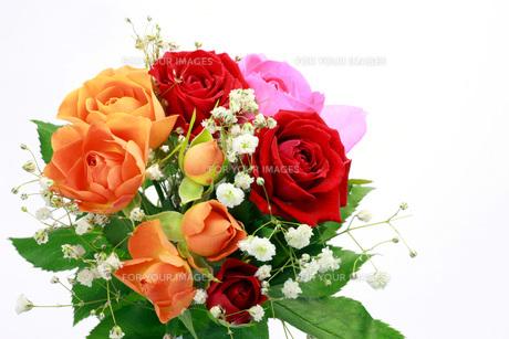 薔薇の写真素材 [FYI00070745]