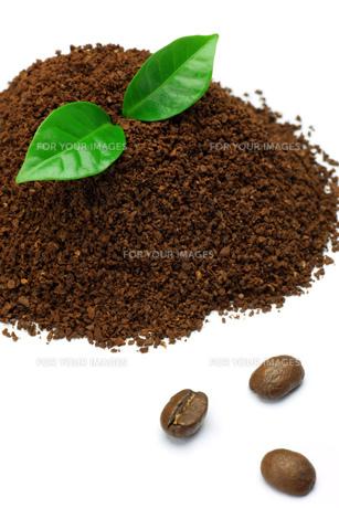 コーヒーの素材 [FYI00071298]
