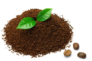 コーヒーの素材 [FYI00071299]