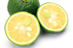 柚子の写真素材 [FYI00071606]