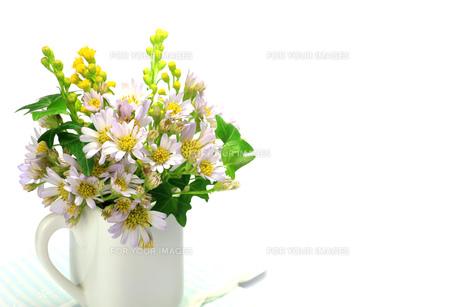 孔雀草とアイビーの写真素材 [FYI00071627]