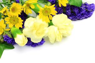 色々な花の写真素材 [FYI00072071]