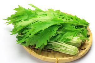 水菜の写真素材 [FYI00072329]