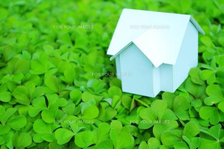 クローバーの上にある家の模型の素材 [FYI00073207]