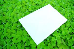 クローバーの上のホワイトボードの写真素材 [FYI00073231]