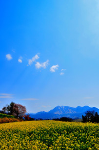 空と雲と山と菜の花畑の写真素材 [FYI00073276]