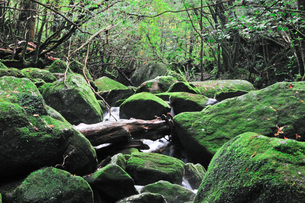 白谷雲水峡の素材 [FYI00073343]