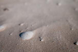 海辺の貝殻の写真素材 [FYI00073355]