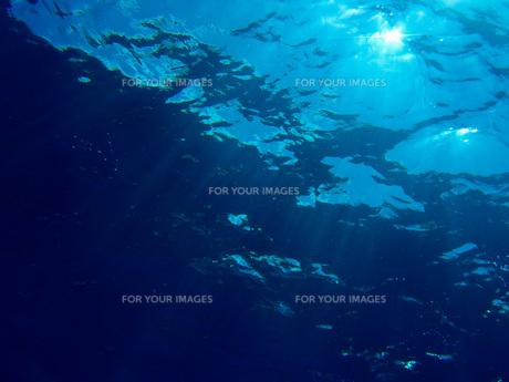 水中の閃光の素材 [FYI00073365]