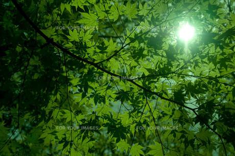 新緑の素材 [FYI00073367]