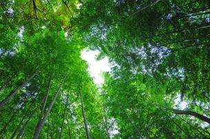 竹林の素材 [FYI00073369]
