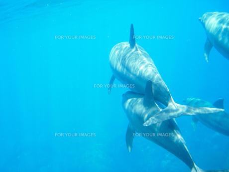 イルカの写真素材 [FYI00073417]