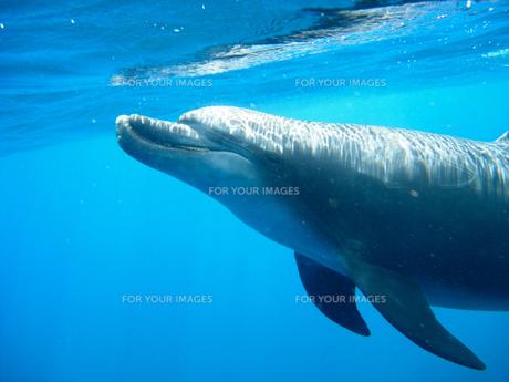 イルカの写真素材 [FYI00073418]