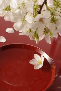 花見酒の素材 [FYI00073511]