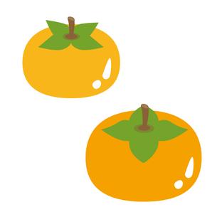 柿の写真素材 [FYI00073655]