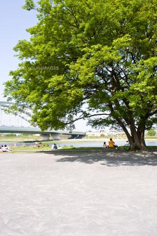 大木の写真素材 [FYI00073839]