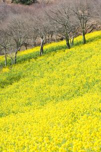 花畑の写真素材 [FYI00073840]