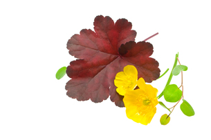 植物の写真素材 [FYI00073959]