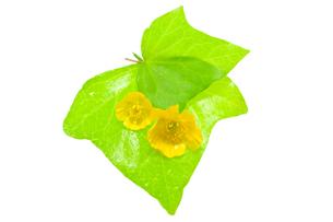 黄色い花の写真素材 [FYI00073964]