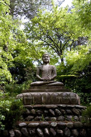 仏陀の写真素材 [FYI00073989]