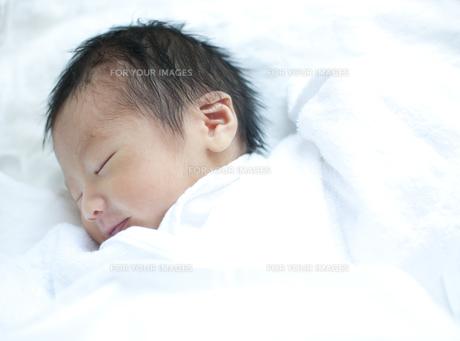 新生児の写真素材 [FYI00074061]