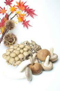 秋の味覚の写真素材 [FYI00074069]