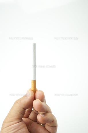 煙草の写真素材 [FYI00074118]