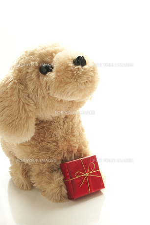 犬へのプレゼントの写真素材 [FYI00074314]