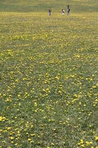 タンポポの咲く広場の素材 [FYI00074457]