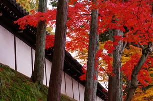 紅葉と和風の塀の写真素材 [FYI00075240]