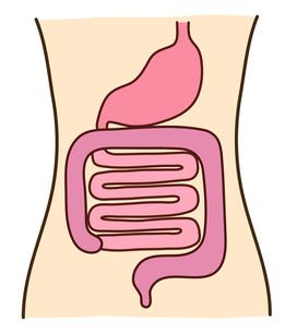 胃腸の写真素材 [FYI00075346]