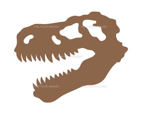 ティラノサウルスの頭蓋骨の写真素材 [FYI00075717]