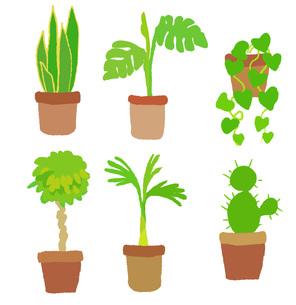色々な観葉植物の素材 [FYI00075902]