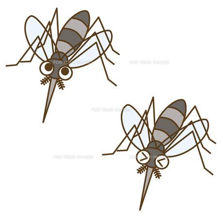 蚊の写真素材 [FYI00076207]