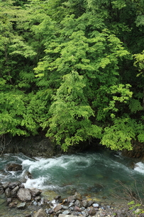 渓流の写真素材 [FYI00076419]