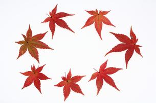 モミジの落葉の写真素材 [FYI00076556]