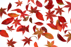 赤い落葉の写真素材 [FYI00076567]